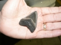 florida-fossil-hunting-2011-4