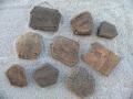 armadillo-fossils-1
