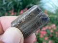 armadillo-fossils-5
