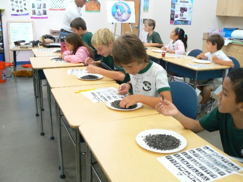 fossil-education-materials-13