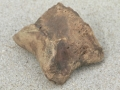 horse-fossils-2