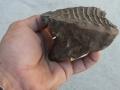 mammoth-and-mastradon-fossils-2