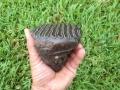 mammoth-and-mastradon-fossils-20
