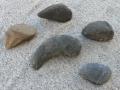 turtle-tortoise-fossils-4