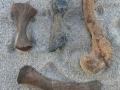 turtle-tortoise-fossils-5