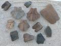 turtle-tortoise-fossils-7