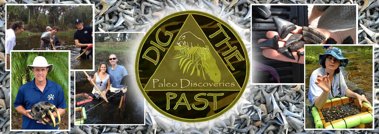 772-539-7005 Fossil Hunting Tours Florida