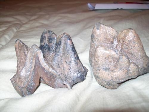 florida-fossil-hunting-2011-22