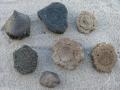 armadillo-fossils-4