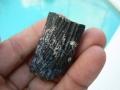 beaver-fossils-4