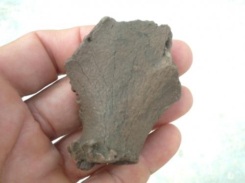 deer-fossils-5