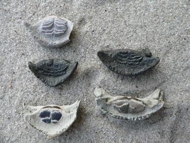 fish-fossils-2