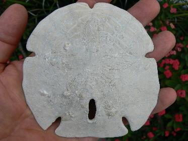 invertebrate-fossils-10