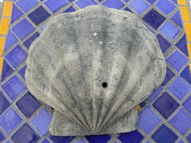invertebrate-fossils-2