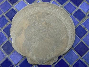 invertebrate-fossils-5