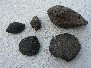 invertebrate-fossils-7
