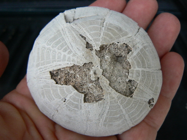 invertebrate-fossils-9