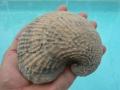 invertebrate-fossils-3
