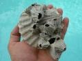 invertebrate-fossils-4