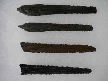 stingray-skate-fossils-3