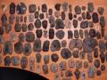 stingray-skate-fossils-6