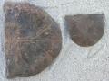 turtle-tortoise-fossils-1