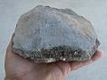 turtle-tortoise-fossils-2