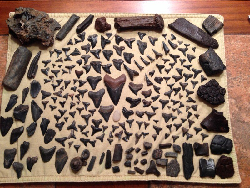 Types of Fossils found in the Peace River area
